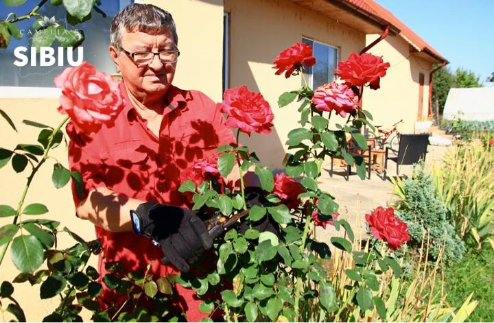 ingrijirea-trandafirilor-toamna