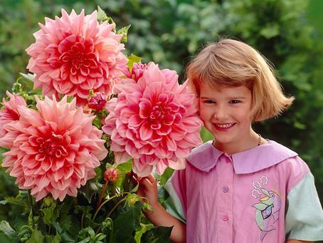Top 5 Flori de Toamna