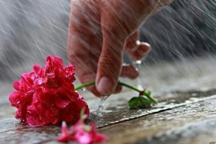 Flori-ploi-torentiale