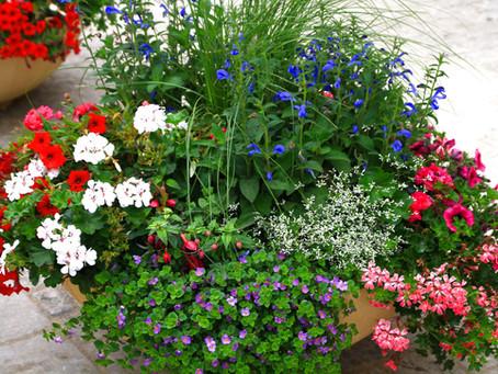 Flori de vara - Cele mai vandute flori anul acesta!