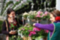 Flori de Gradina Agatatoare