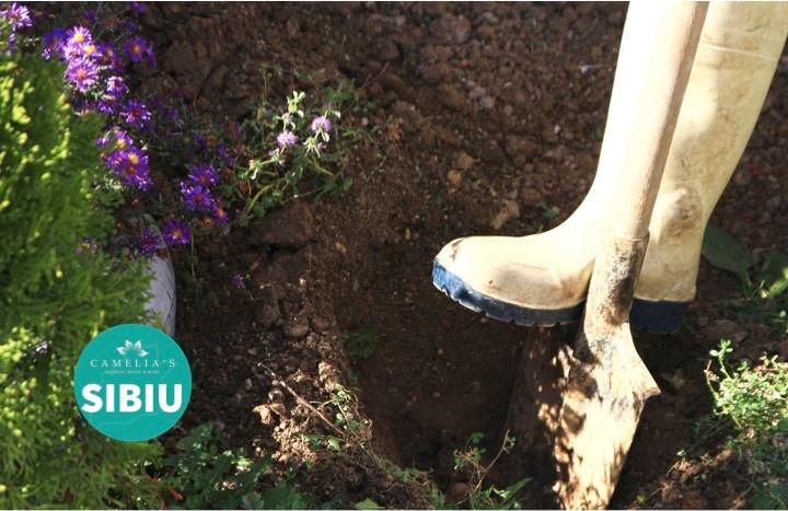 plantarea-trandafirilor-groapa