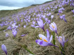 Flori de Primavara - Sfaturi, Imagini, Denumiri