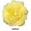 Thumbnail: Begonia Curgatoare