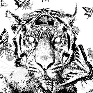 TIGER VS TIGERSWALLOWTAILS
