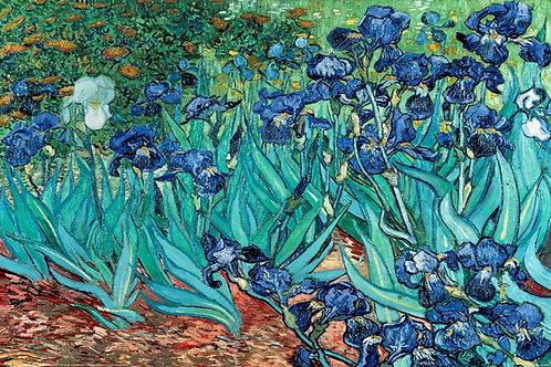 Poster G - Van Gogh flor azul