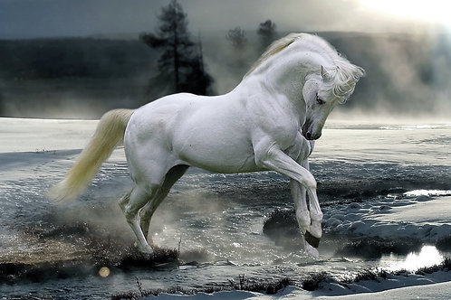 POSTER M GB PH 0560 LIQ HORSE SNOW