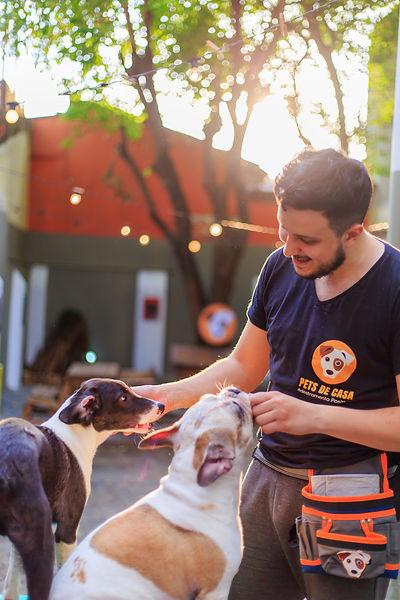Adestrador Pet de Casa dois cachorros