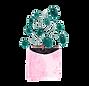 Pannenkoekplant.png