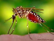 Chorvatsko zaplavili komáři