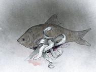 Nebezpečné parazity číhajú aj v obyčajnom lososovi