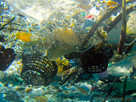 České řeky jsou plné mikroplastů, dostávají se i do lidí