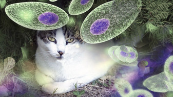 Flégr: Nová zjištění jsou šokující, toxoplasma obrovsky škodí zdraví