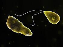 Neurony požírající měňavka se opět objevila v pitné vodě