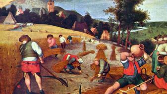 Skutečný důvod, proč je pšenice toxická – a není to lepek ani šlechtění