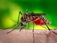 Komár - nejnebezpečnější živočich na planetě