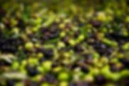 olive-1024x681.jpg