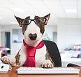 Marketing dog.jpg