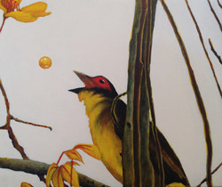 fig bird 2