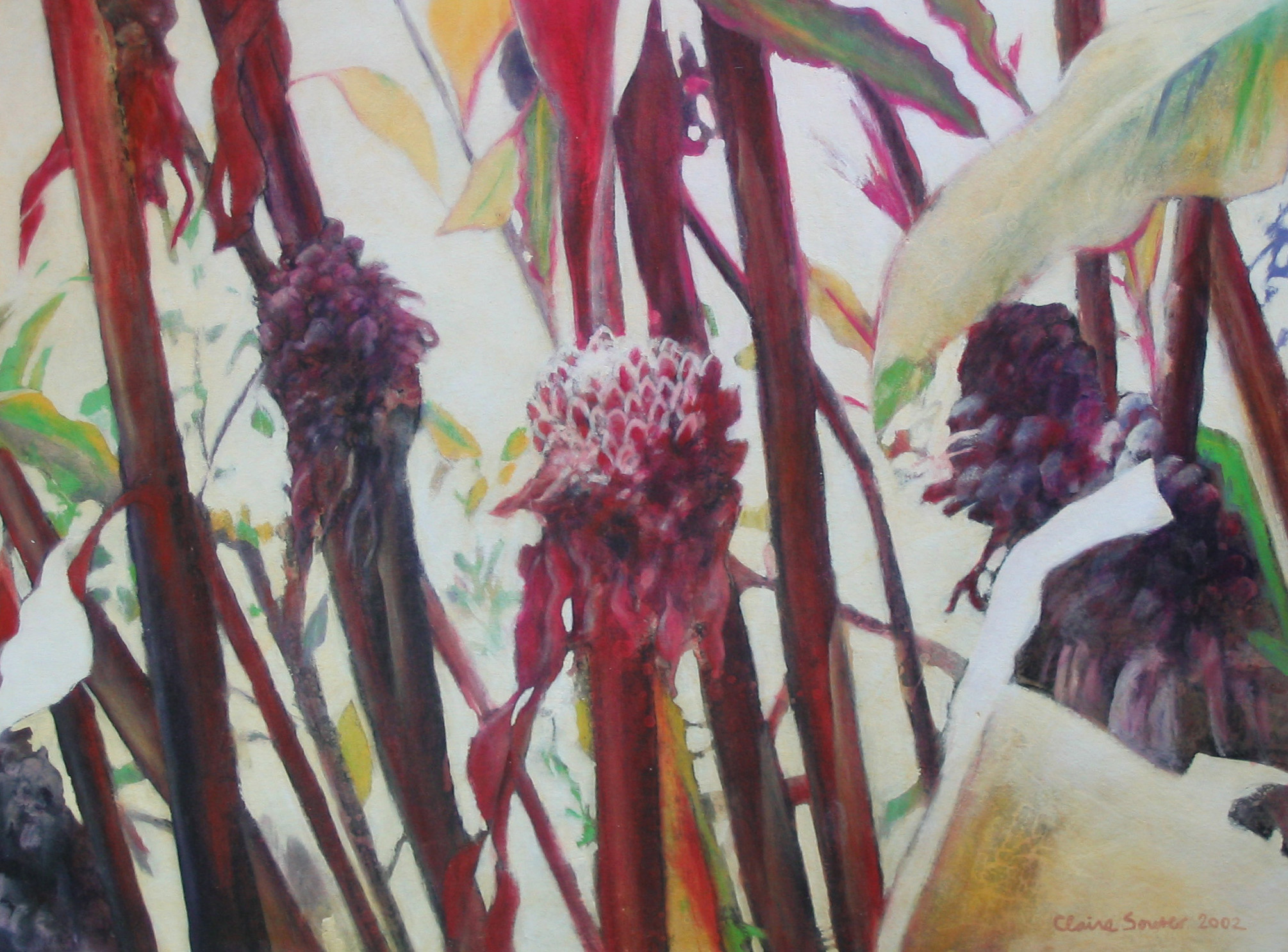 torch ginger 2