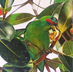 fig parrot 9