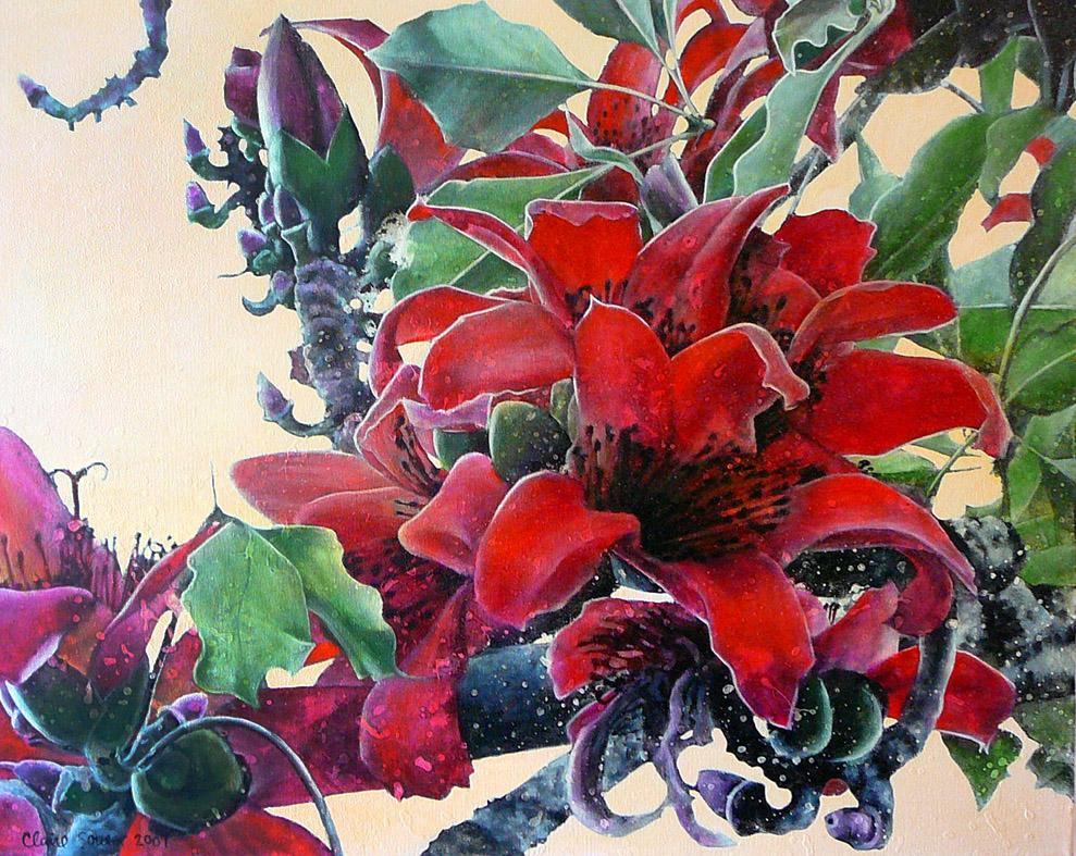 red silk cotton tree 1