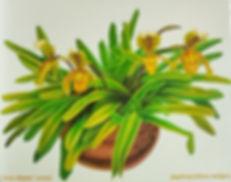 3 lady slipper orchid.jpg