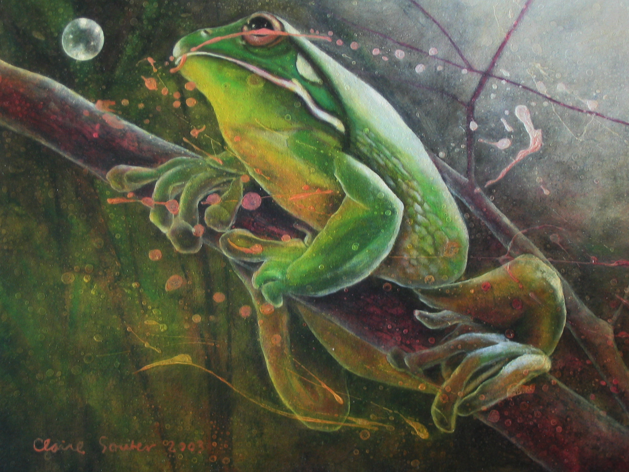 green tree frog 6