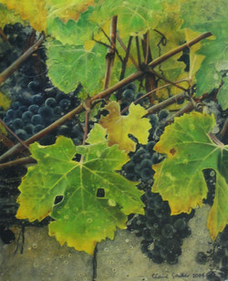 grapes 2  SOLD