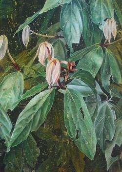 white bollywood gum leaves