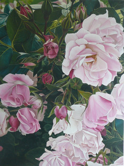 rosey antidote