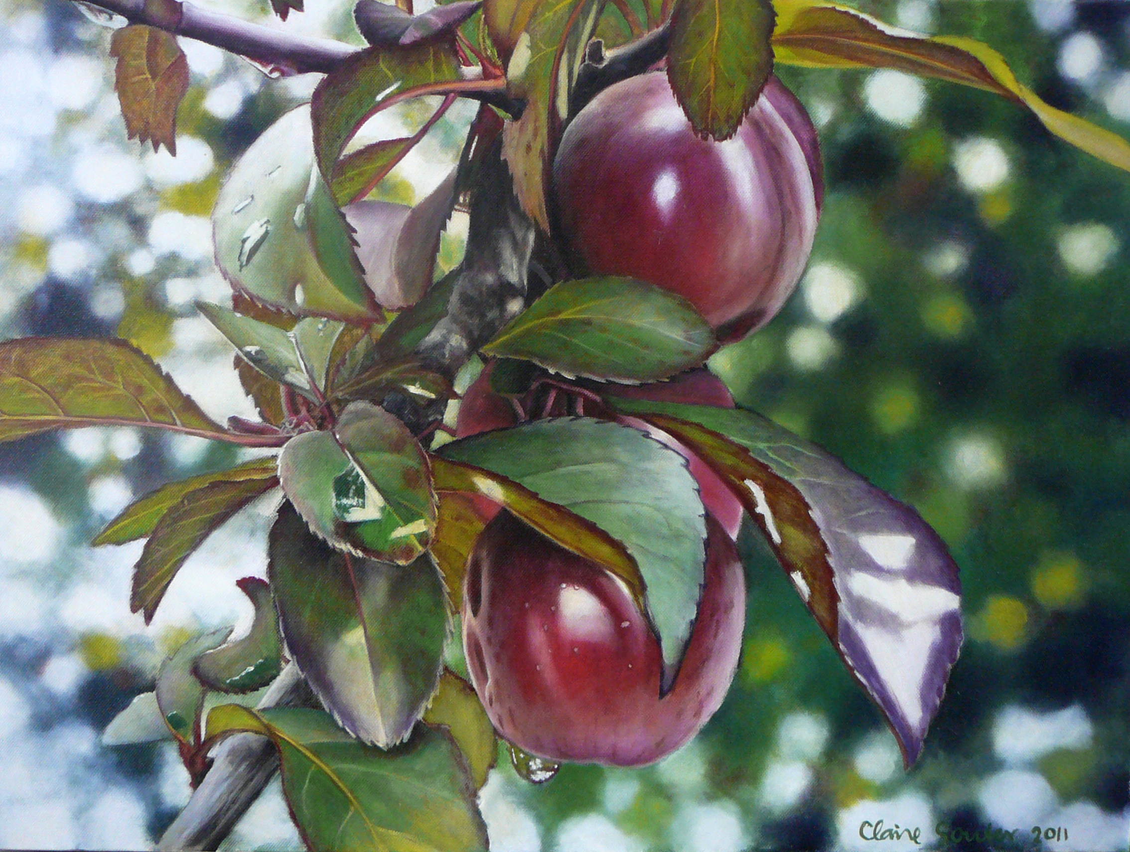 Penola plums
