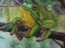 green tree frog 2