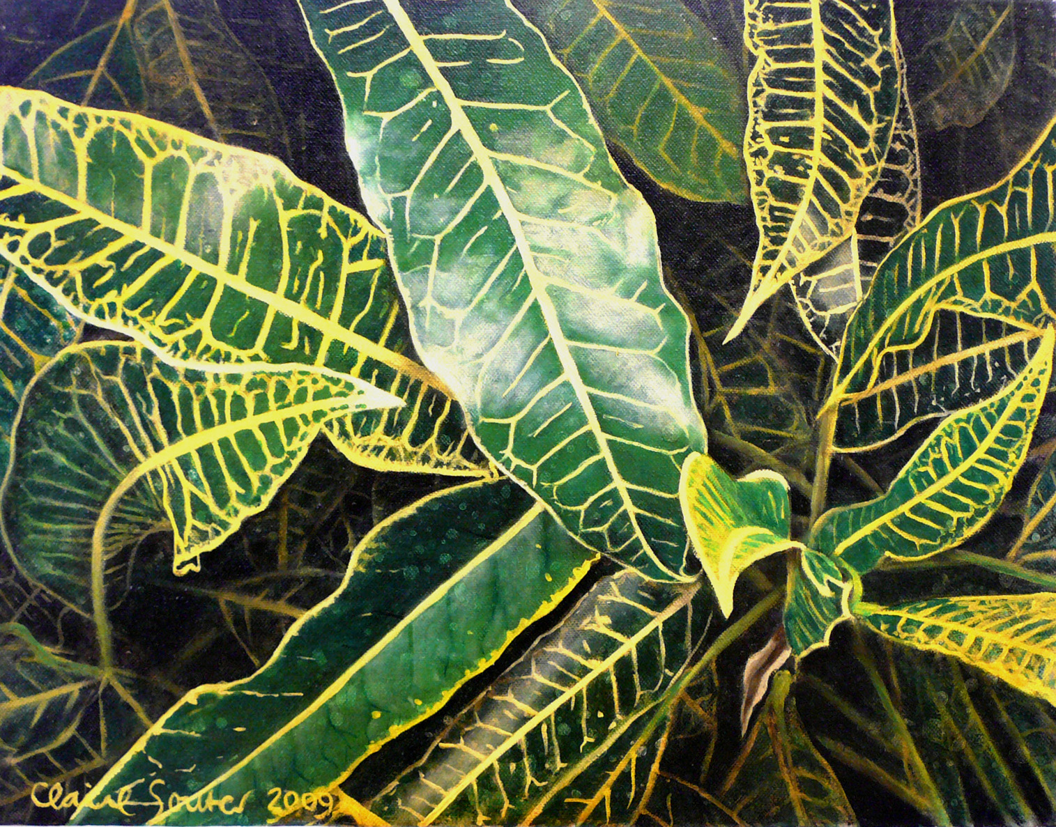 yellow and green croton 3