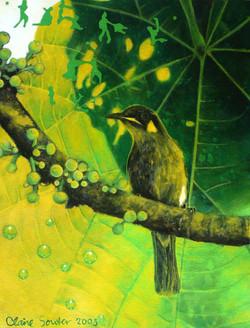 yellow spotted honeyeater