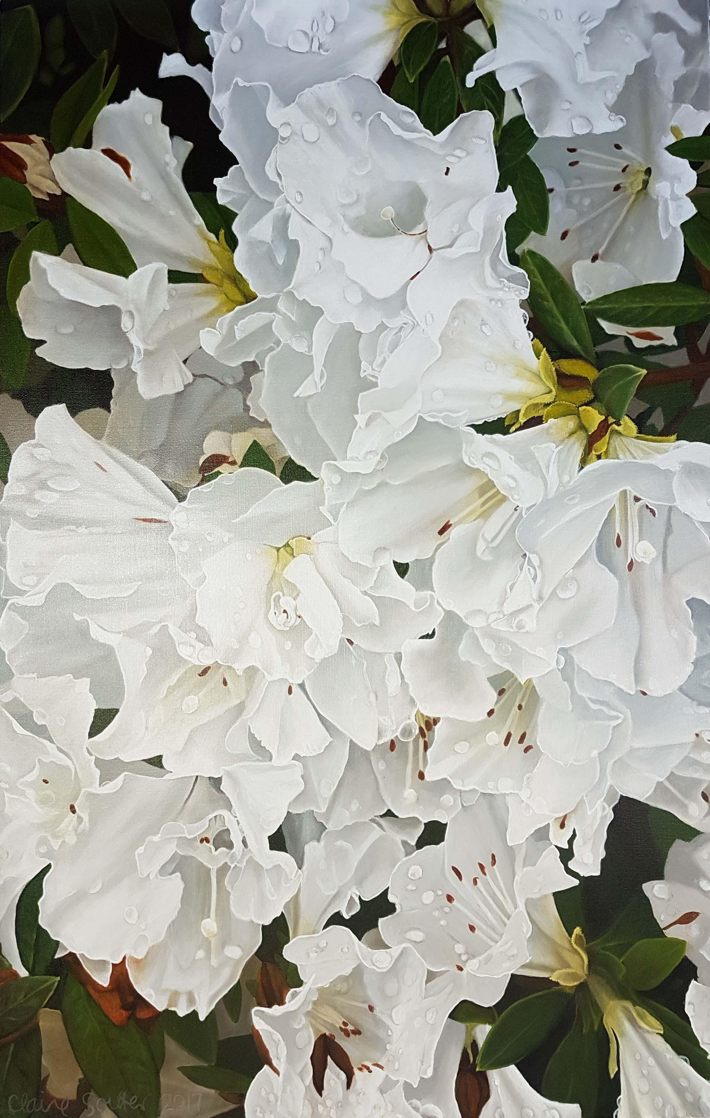 the azaleas