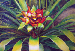 large bromeliad