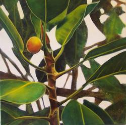 fig parrot 6