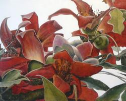 red silk cotton tree 3