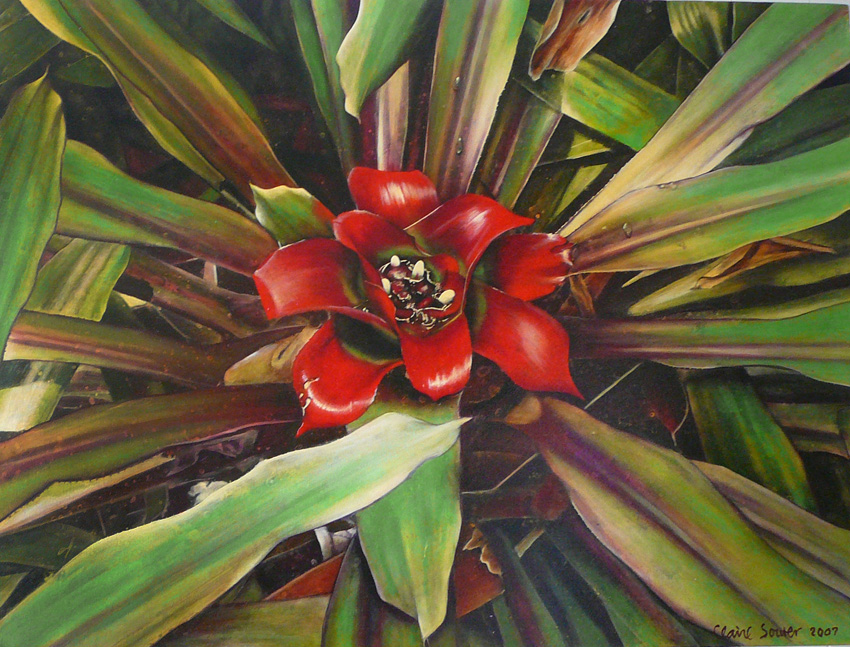 red centre bromeliad