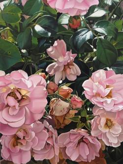 rose abundance part 2