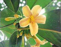rainforest flower 2