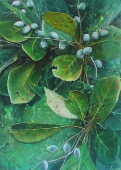 blue almonds 1