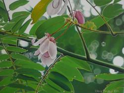 first cassia flower