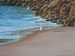 the seagull and the rocks