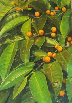 yellow berries 2