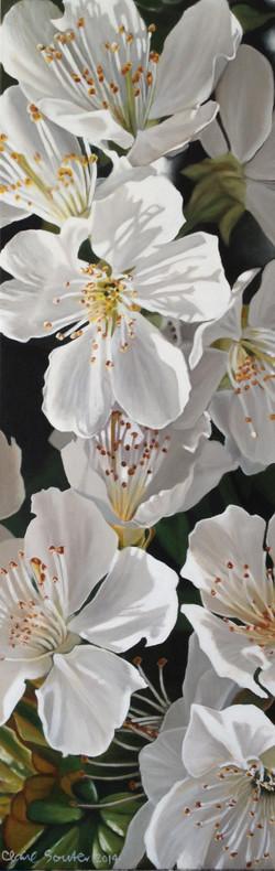 white Qingdao blossom