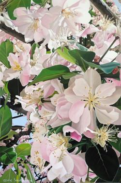 Qingdao cherry blossom part 1