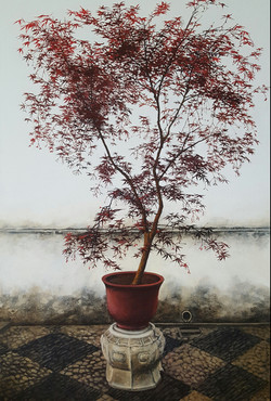 Japanese maple in China