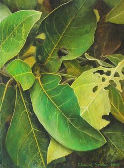 leaf 5